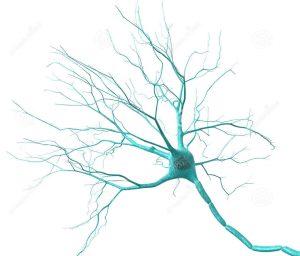 neurone-20028537